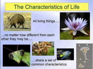http://1.bp.blogspot.com/-GcWj9qxq4Xk/Ur2M0y2Kr3I/AAAAAAAAFnA/aoMDQnzwnOM/s320/Characteristics+of+Life+PowerPoint.jpg