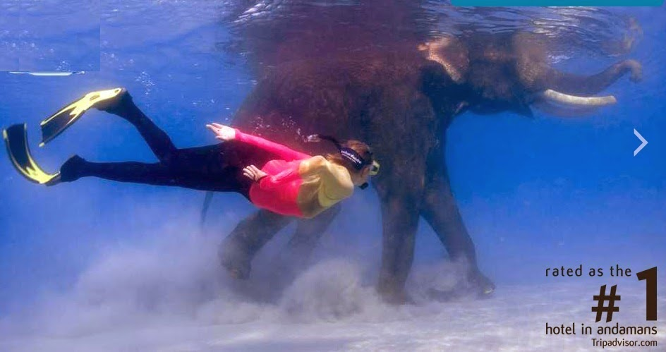 Snorkeling with elephant Rajan at Havelock Island
