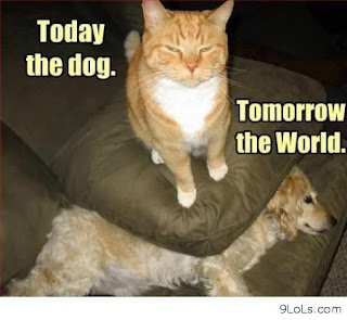 Funny cat sayings today the dog tomorrow the word