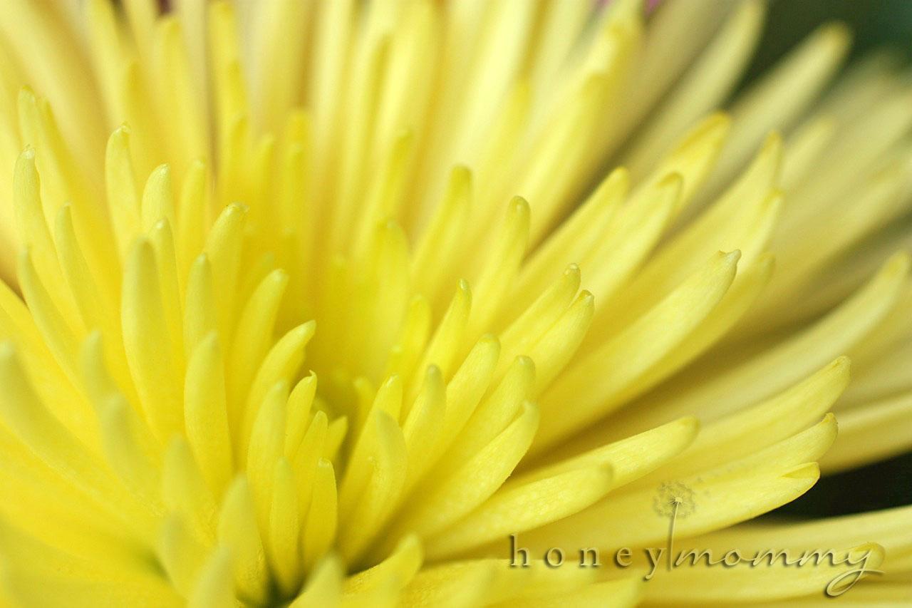 Honey Mommy Scavenger Hunt Sunday 3 3 13