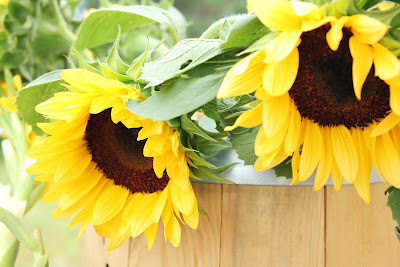 sunflowers in barrel