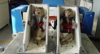 monyet ruang angkasa