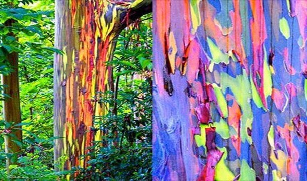These 20 Unbelievable Pictures Might Look Like An Illusion But They Are Absolutely Real - Rainbow Trees