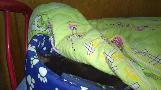 這幾天比較凍, 黑貓就只愛吃和睡!