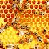 Belajar dari Sang Lebah...