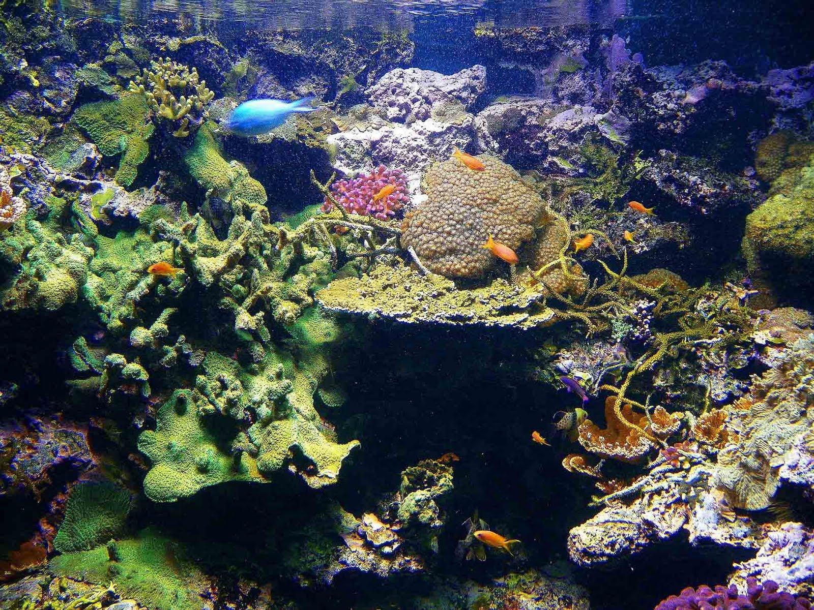 Aquariums In Ohio
