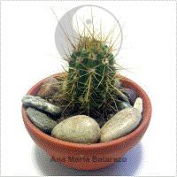 Cura y mejora tu energ a en casa con las plantas ana for Plantas que se deben tener en casa segun feng shui