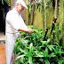 Bài thuốc chữa bệnh vẩy nến từ cây lược vàng
