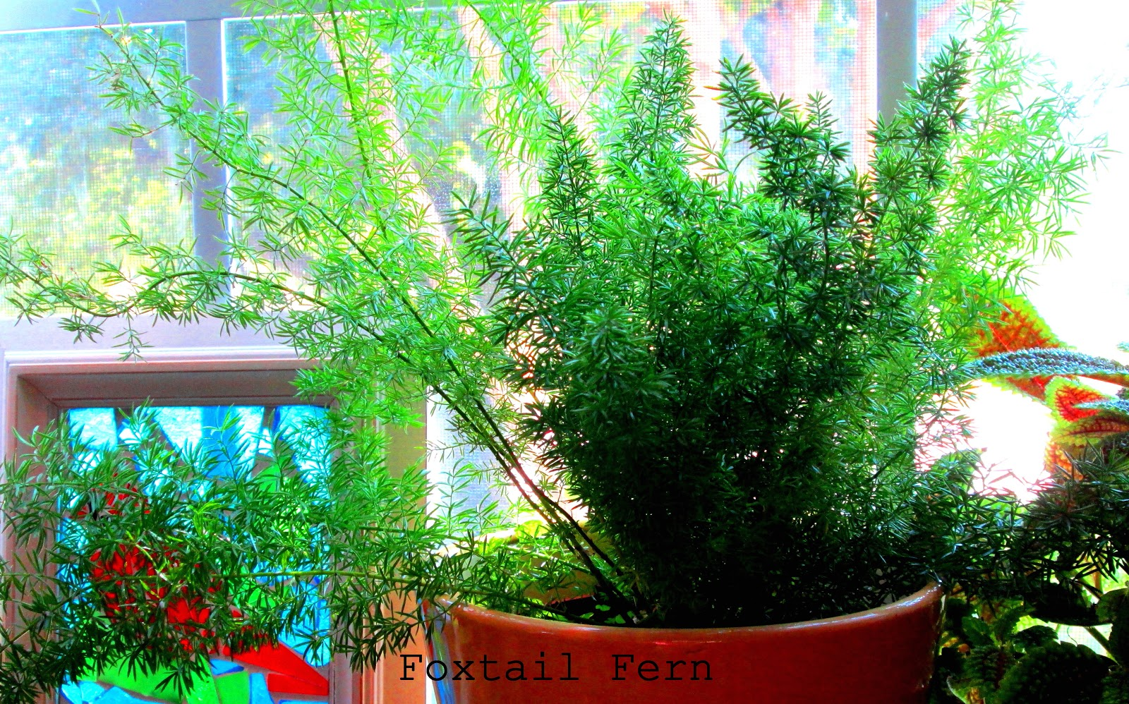 AT HOME WITH JEMMA: Winter Windowsill Garden