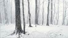 Sfondo invernale-07