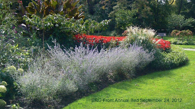 Light purple Russian sage edges the east side of the main Annual bed at BRG.