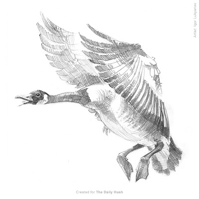 flying wild goose sketch