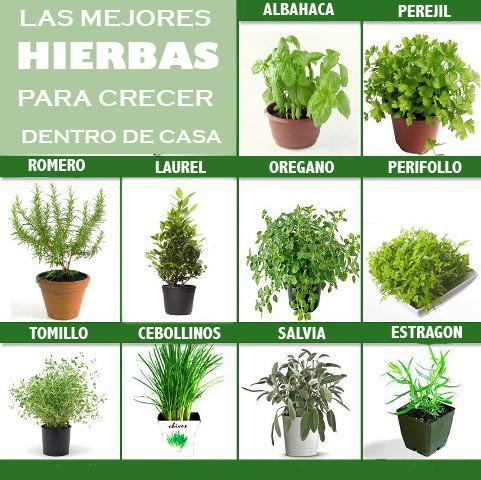 Como crecer tu propio jard n culinario dentro de casa for Como evitar que salga hierba en el jardin