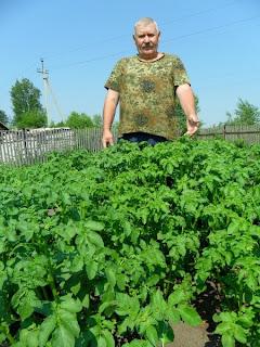 24 июня, картофель перед цветением