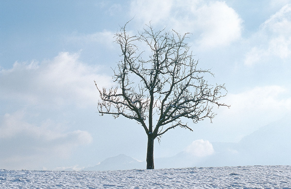 And freezing winds can make winter a stressful time of year for trees