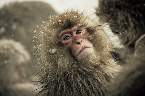 O Conde de Monkeycristo