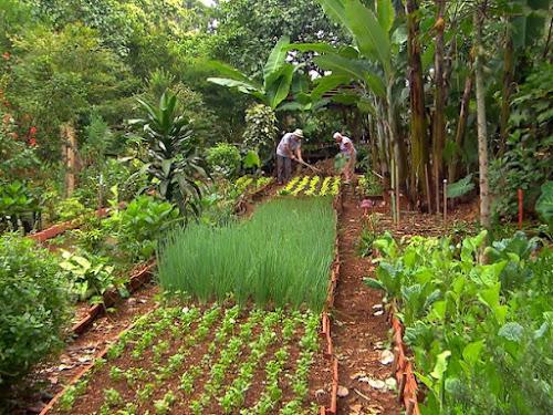 Terrenos baldios são transformados em hortas orgânicas por moradores em SP