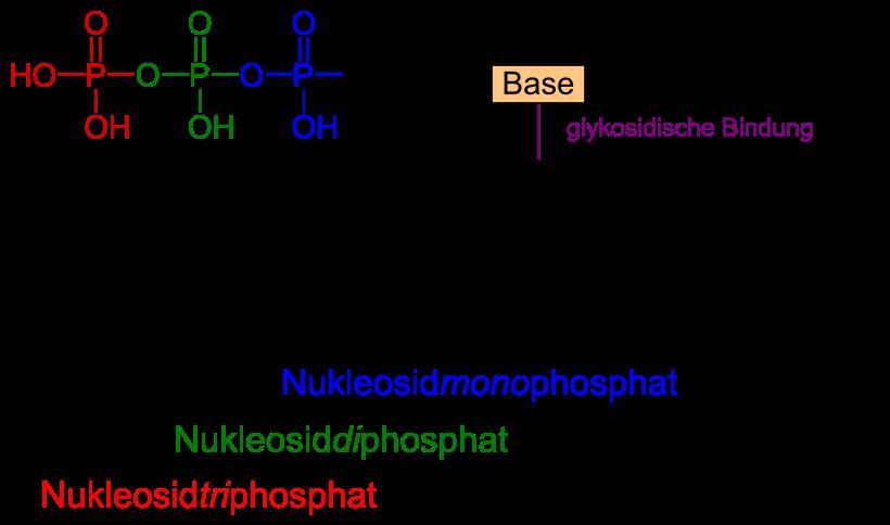 http://de.wikipedia.org/wiki/Nukleotide