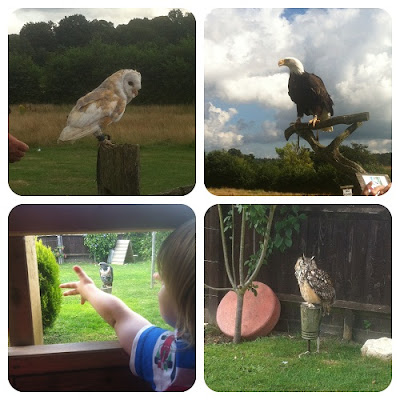 birds of prey, Groombridge Place, Barn Owl, Bald eagle
