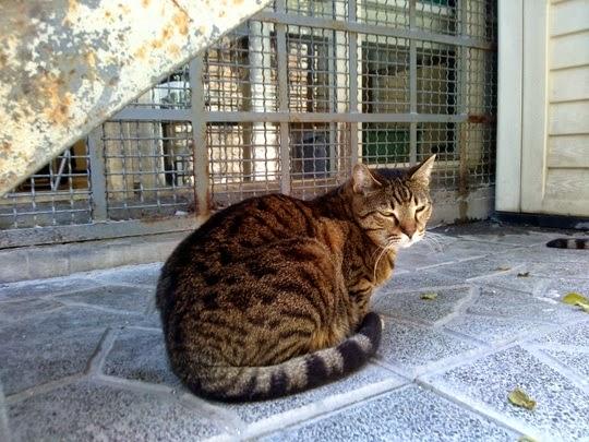 Torre Argentina cats