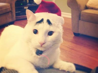 foto samhaseyebrows, kucing yang memiliki alis 05