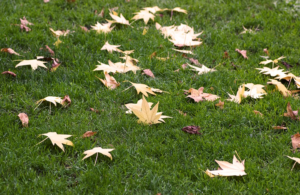 fotografía otoño Madrid El Retiro