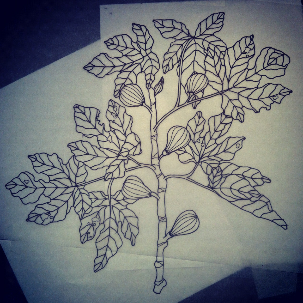 Today a peacock fig tree tattoo for Fig tree tattoo