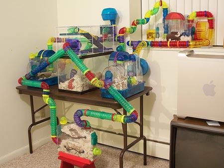 Mundo do hamster gaiolas lugar de cria o e acess rios - La plus grande cage a hamster du monde ...
