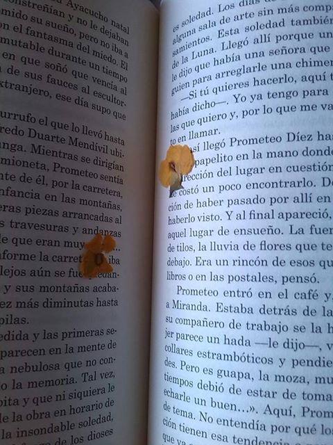Un libro es un jardín en tu bolsillo.