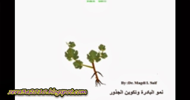 فيديو-  تعلم كيفية تقليم العنب grapes pruning