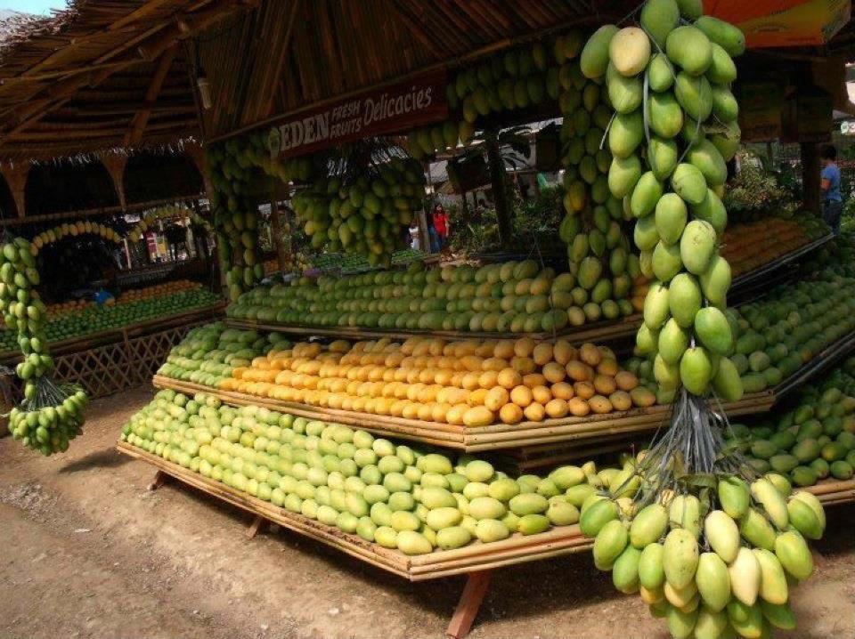 Philippine national fruit mango