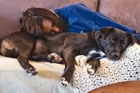 trauma por stress em cães