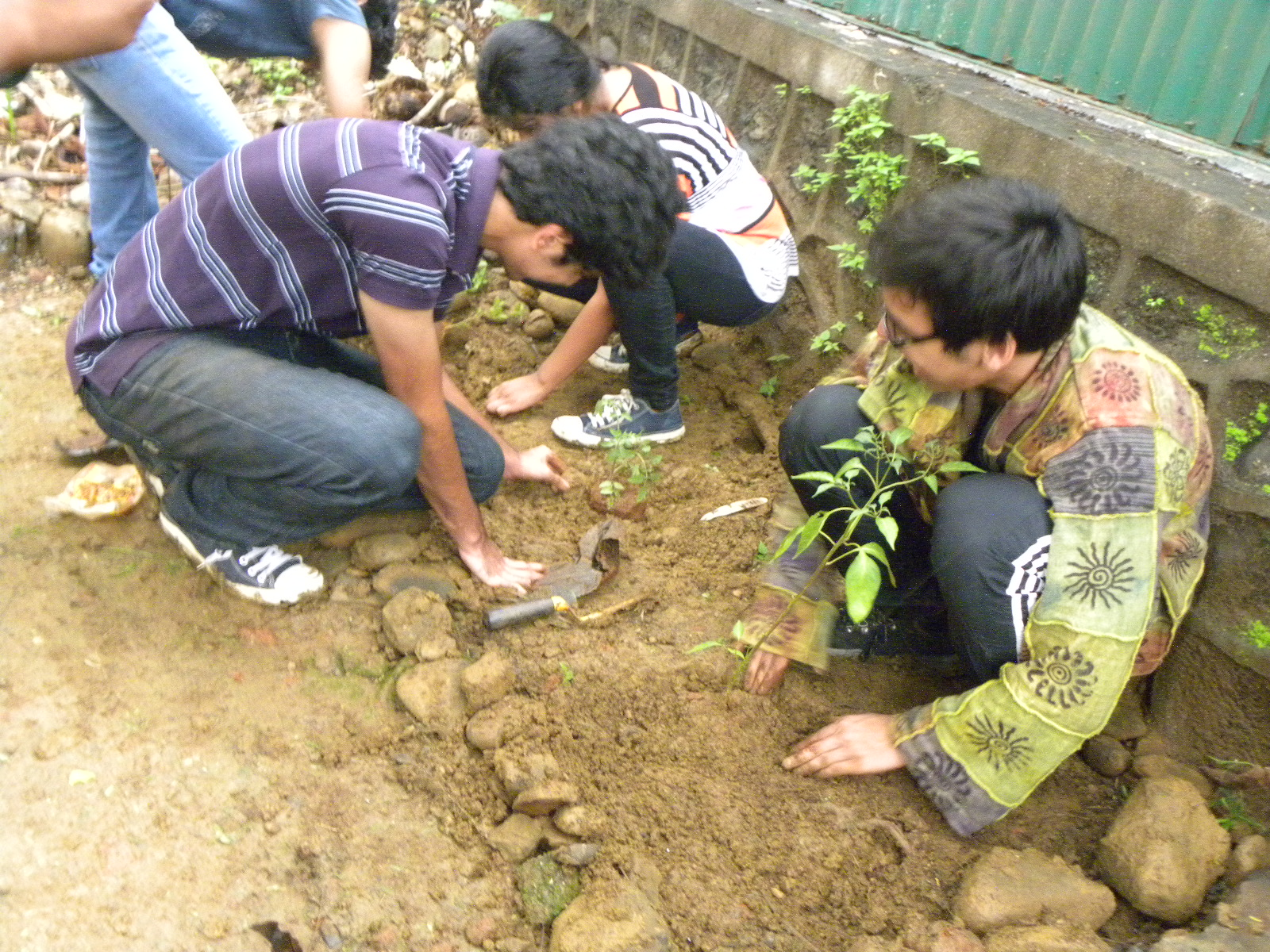 n development foundation idf cas activity podar the tree plantation activity was conducted as a part cas creativity action service prog of the school idf appreciates the efforts of the school in