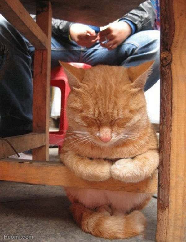 cute cat sleeping in awkward position, funny cat photos