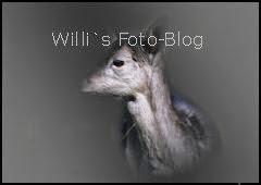 Willi`s Foto-Blog