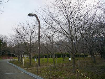 大阪府・深北緑地ウォーキング 桜の園