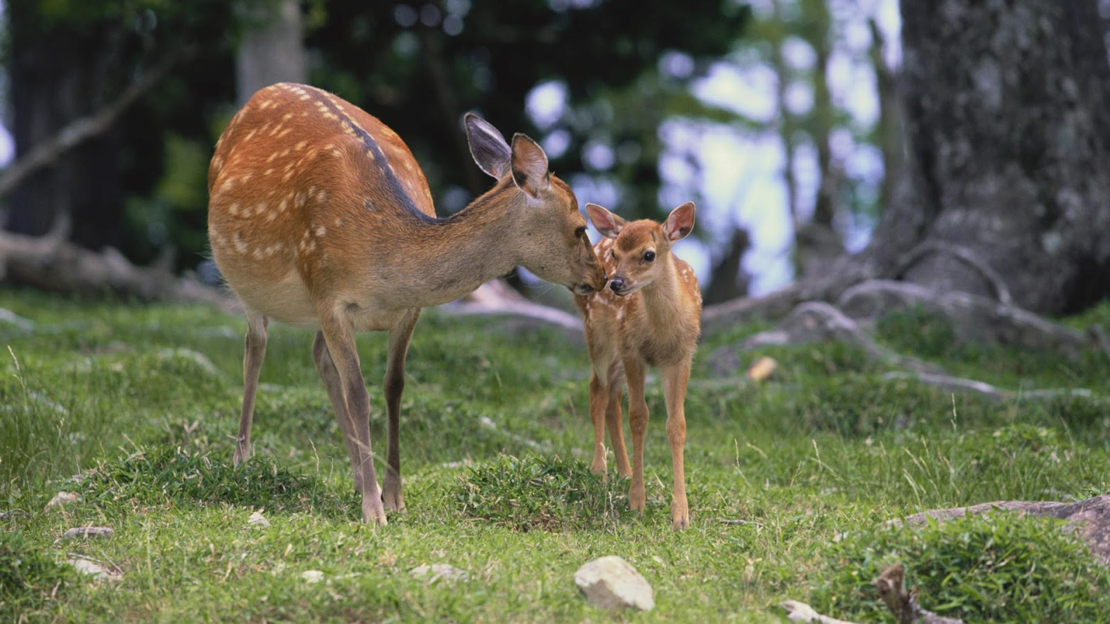 deer island asian dating website Arrangements can be made through the backpackers miyajima, and website an old-school japanese ryokan dating back to tame deer amble around the island.
