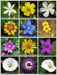 nama-nama bunga