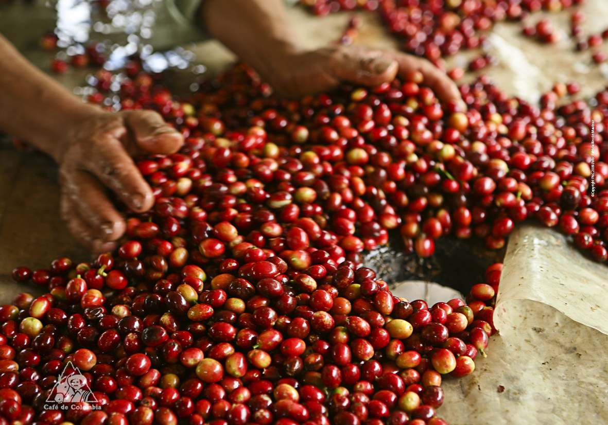 Nespresso Caf Ef Bf Bd Guatemala