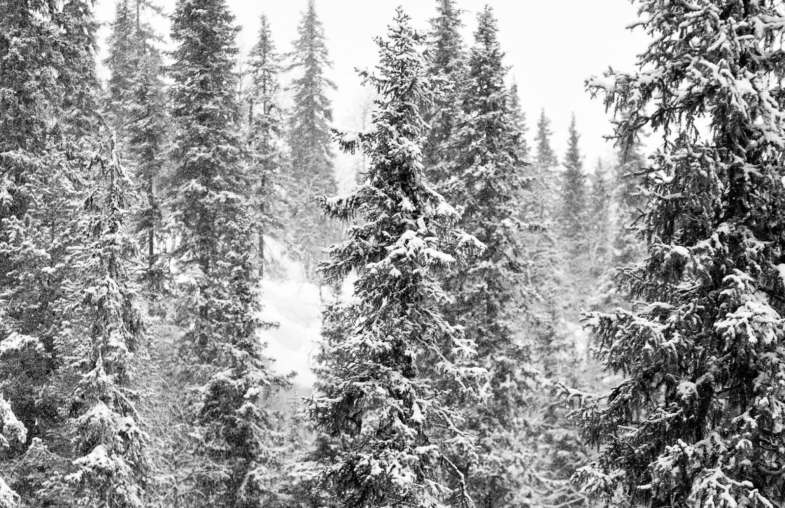 Het winterse landschap