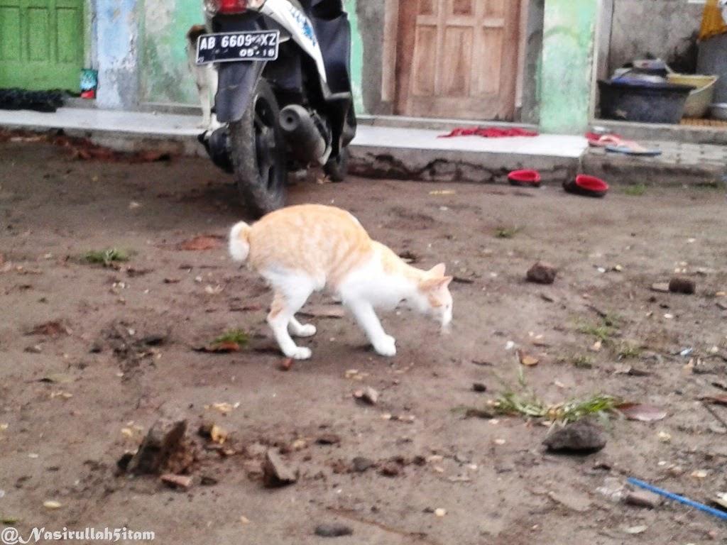 Kucing dan Semut hitam berburu Laron pagi hari