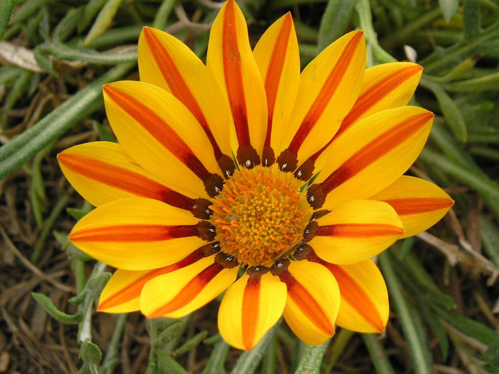 8 Wildflower top 10 flowers of love