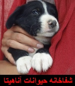 دیدار عمومی از شفاخانهی حیوانات آناهیتا