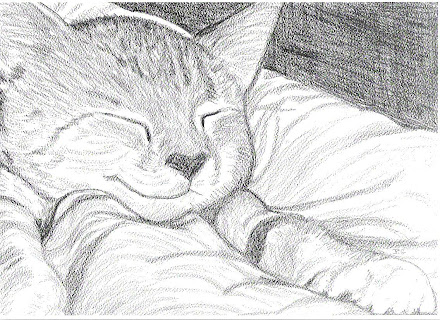 Kitten asleep paws on top of covers pic