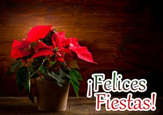 feliz poseinavidades Flores-nochebuenas-navide%C3%B1as-flores-de-navidad-Poinsettias-flowers-flores-rojas-+(21)