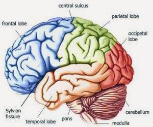 Makanan Yang Sehat Penting Untuk Menunjang Kecerdasan Otak