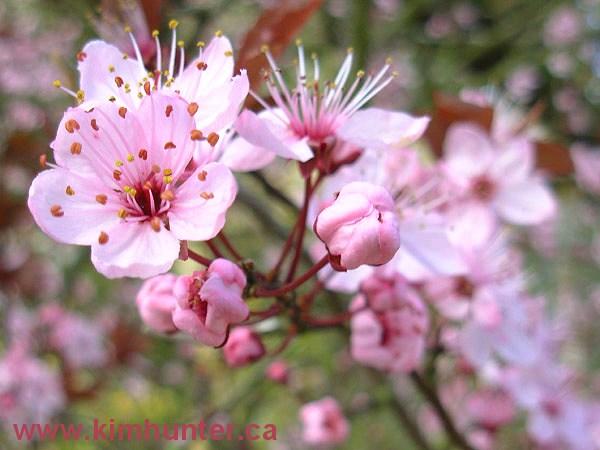 Locky\'s English Playground: Vocabulary: Chinese New Year Flowers ...