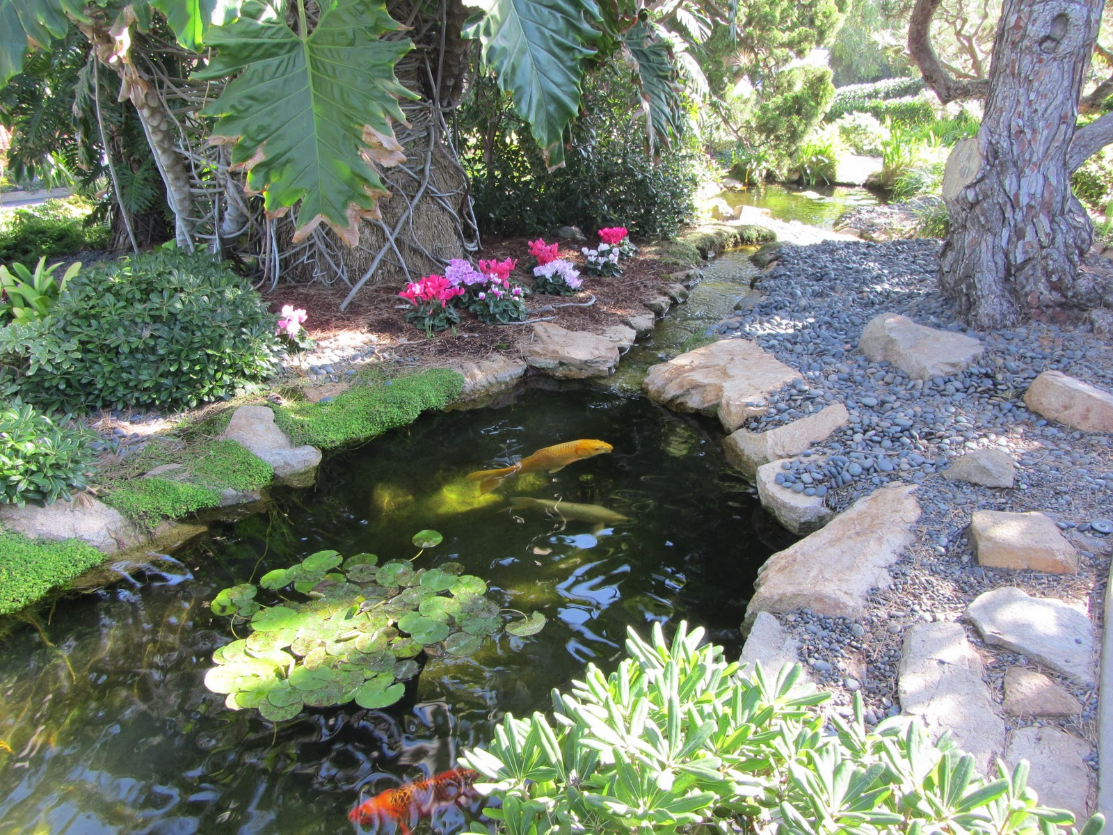 Enjoy San Diego Self Realization Fellowship Gardens In Encinitas