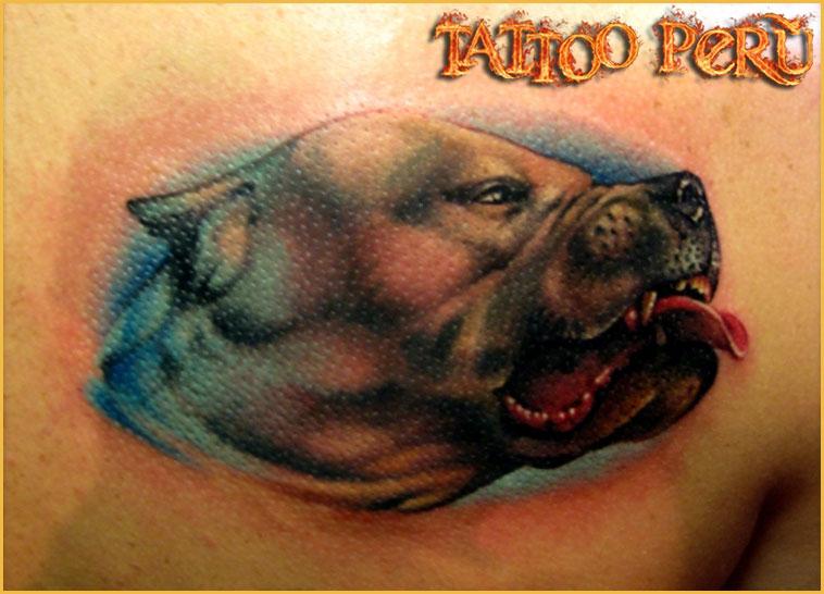FOTOS DE TATUAJES Tatuajes_de_perros_pitbull