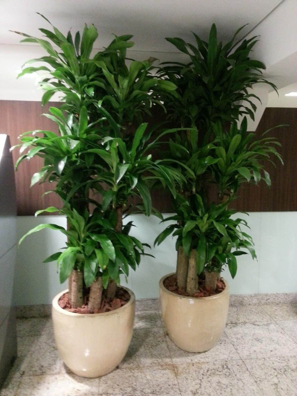 A boa vista projetos de paisagismo mercado procura melhor padr o de plantas para interior - Plantas resistentes de interior ...